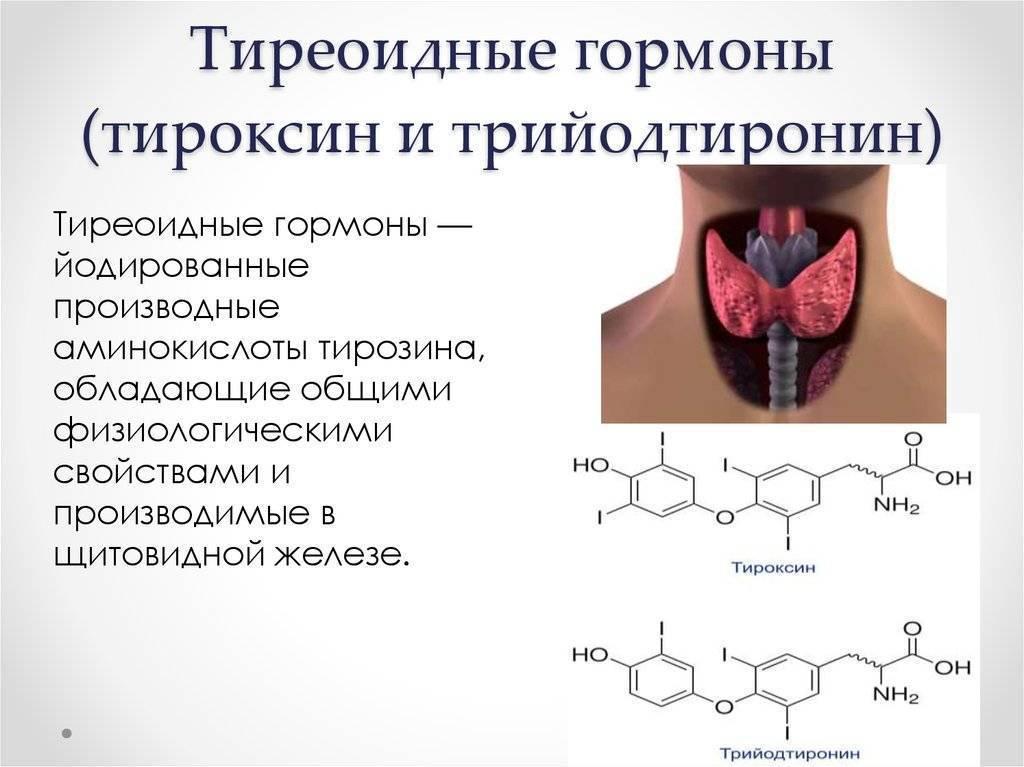 Значение гормона т3 свободный: о чем свидетельствуют отклонения от нормы?
