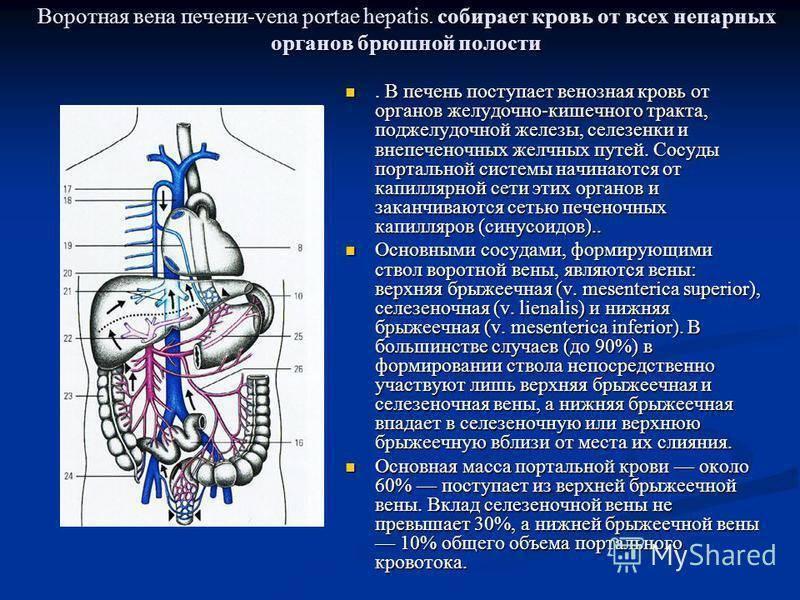 лимфаденопатия ворот печени что это