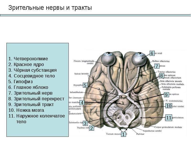 Атрофия зрительного нерва: причины патологии и лечение