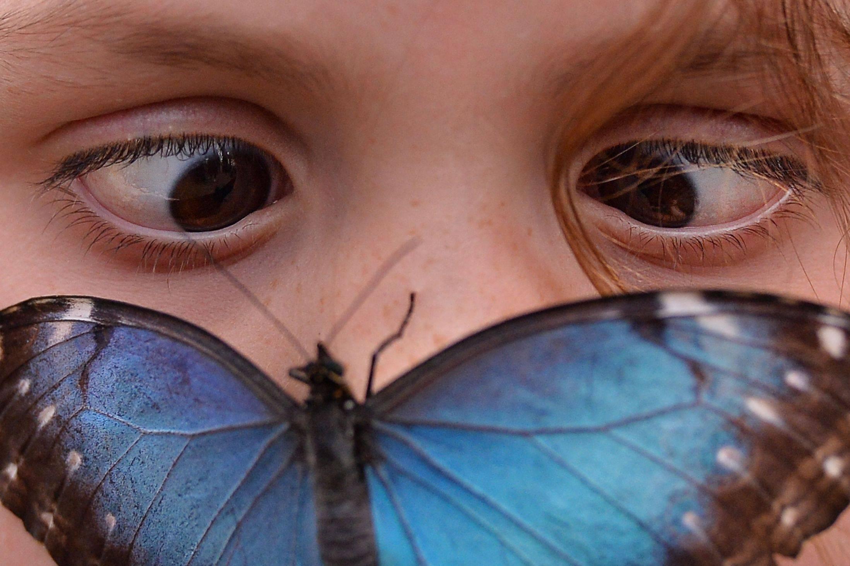 Инсектофобия или энтомофобия — боязнь перед насекомыми