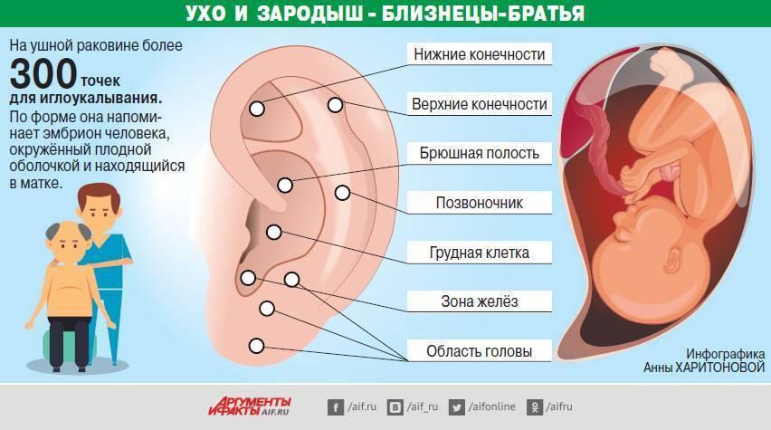 Точки на ухе отвечающие за органы