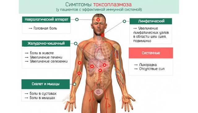 Токсоплазмоз у взрослых. симптомы и лечение, препараты, народные средства. как передается, диагностика