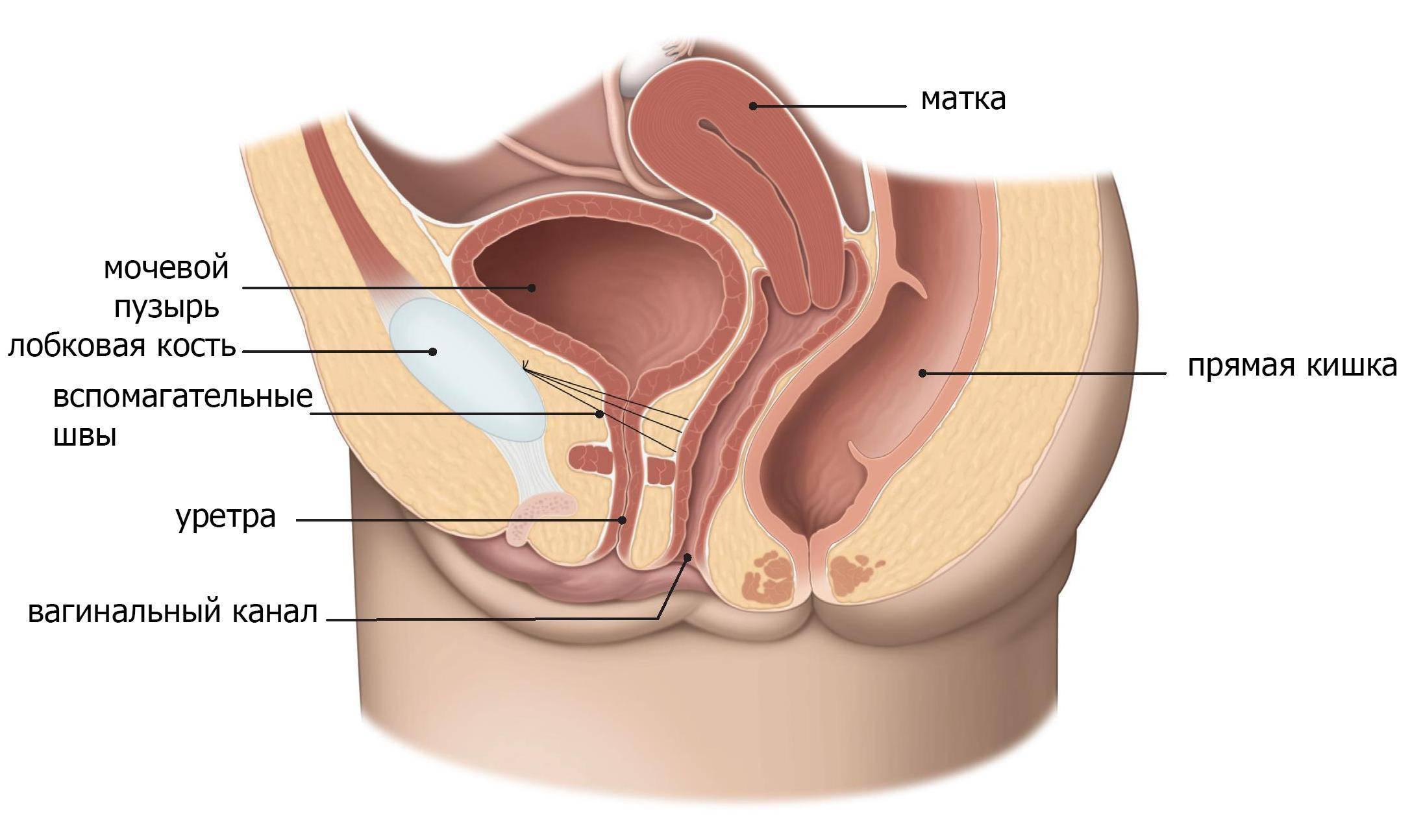 После полового акта молочница и цистит – женское здоровье