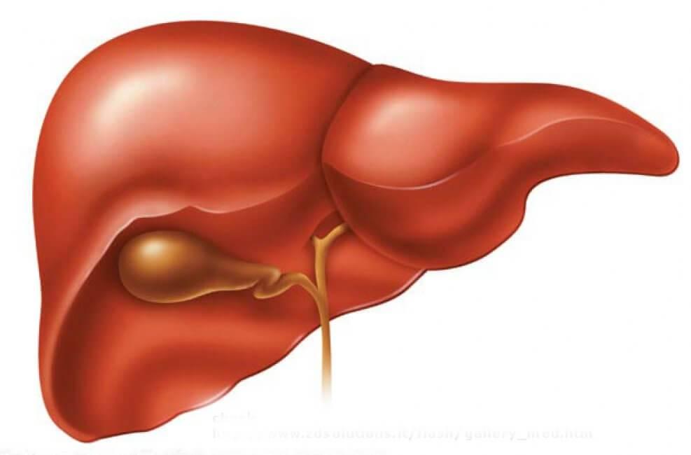 Гепатит реактивный. лечение и рекомендуемая диета для детей и взрослых при диагнозе реактивный гепатит реактивный гепатит симптомы