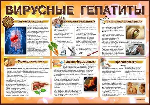 Возбудитель вирусного гепатита а: характеристики, свойства, устойчивость и профилактика