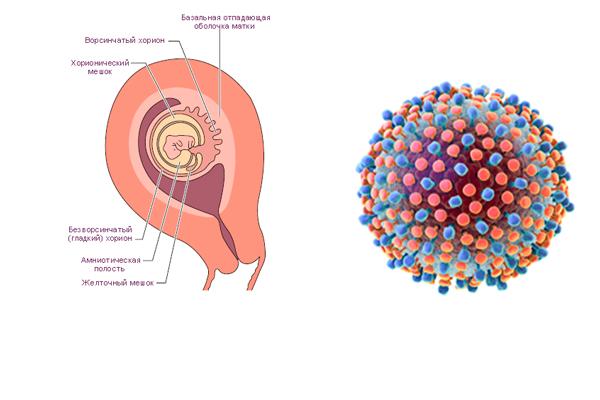 Гепатит в и беременность: можно ли рожать с таким диагнозом и какие существуют риски?диагностика и лечение печени и желчного пузыря