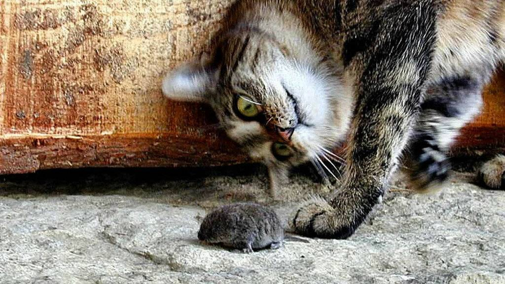 Айлурофобия или страх перед кошками: причины появления и лечение