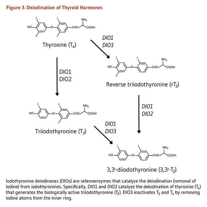 Анализ на гормоны щитовидной железы: расшифровка
