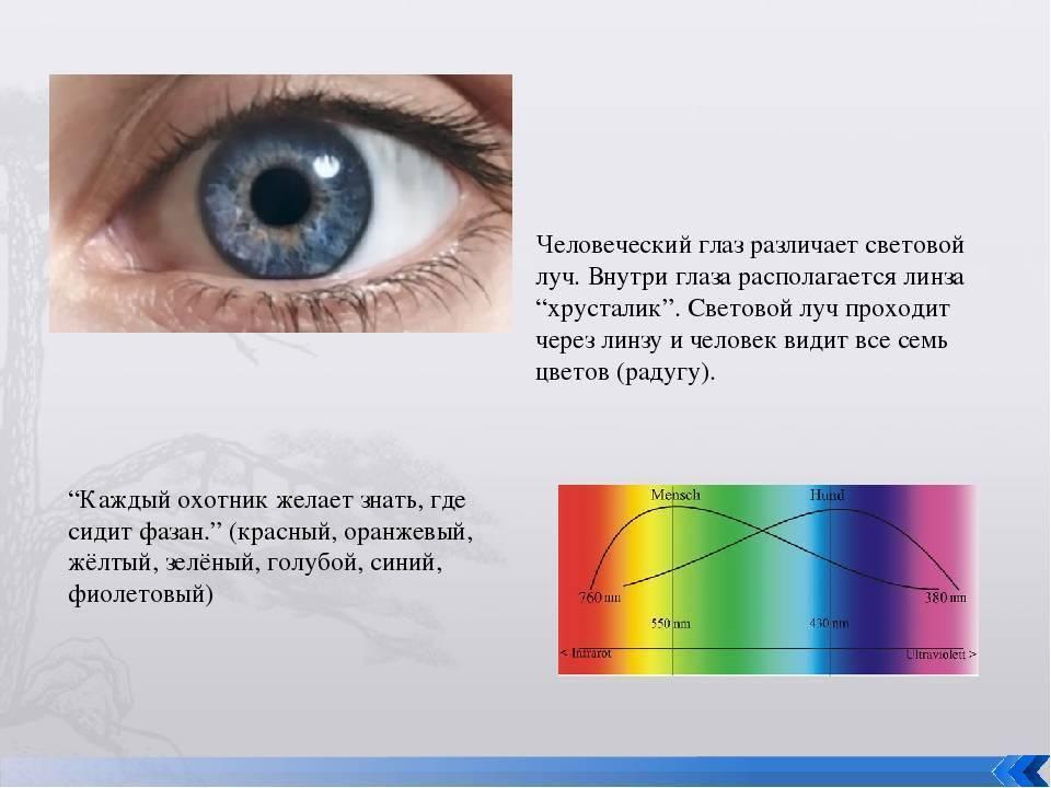 почему глаз человека различает больше оттенков зеленого