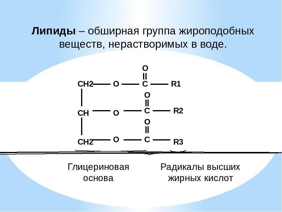 строение липидов таблица
