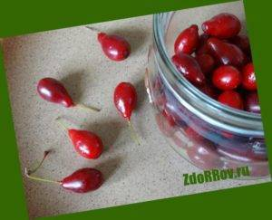 Кизил от геморроя: лечение ягодами и косточками кизила