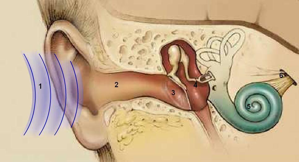 Эффективное лечение кохлеарного неврита слухового нерва