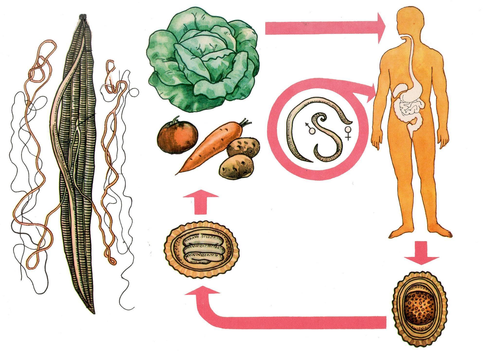 как вывести паразитов из организма