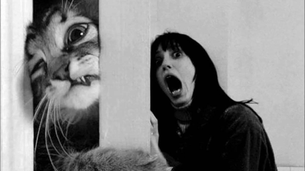 Диагностика и способы лечения боязни кошек (аклюрофобии)