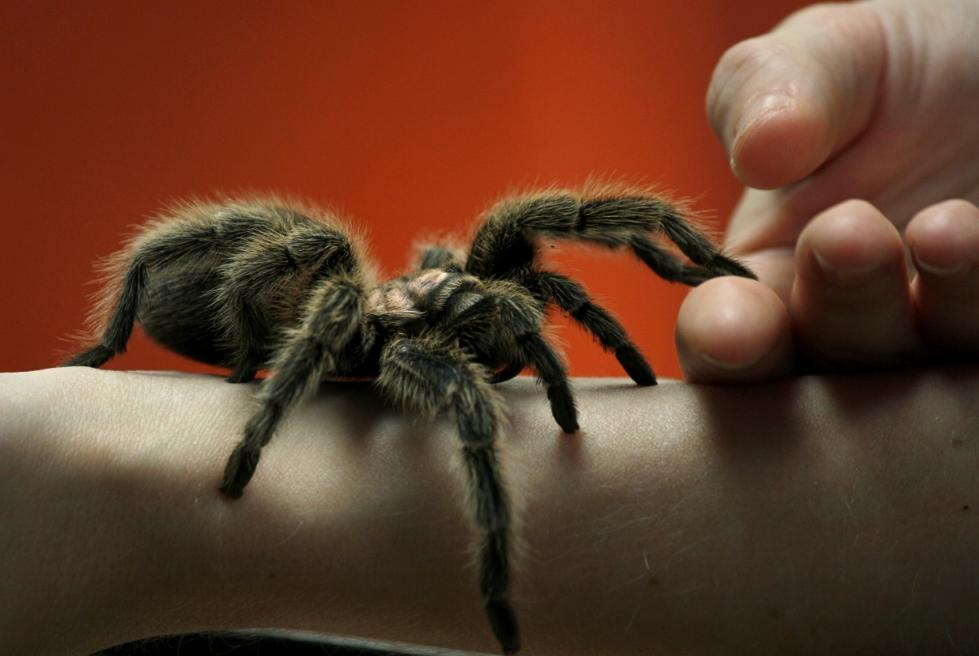 Арахнофобия или боязнь пауков: причины возникновения фобии
