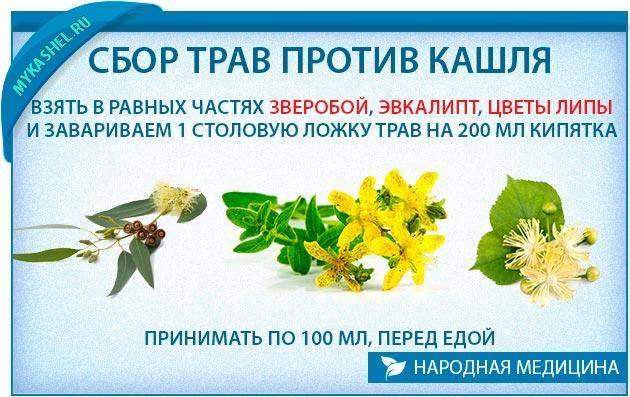 Лекарственные растения для детей от кашля