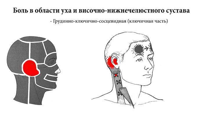 Почему болит за ухом при нажатии?