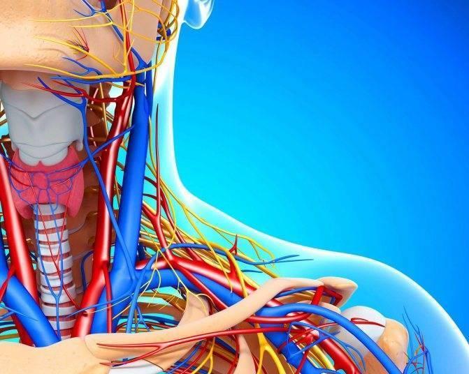 Методы лечения атеросклероза сосудов шеи