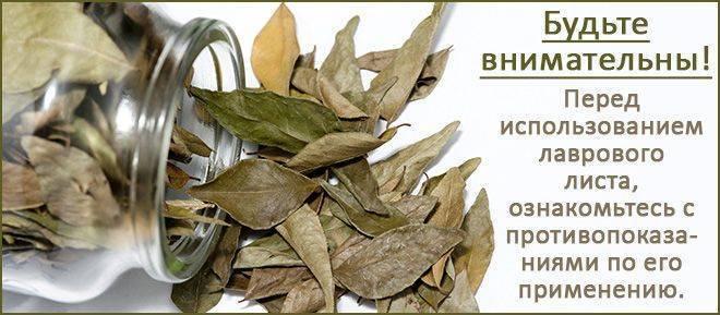 как лечить цистит лавровым листом