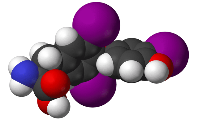 т3 гормон щитовидной железы