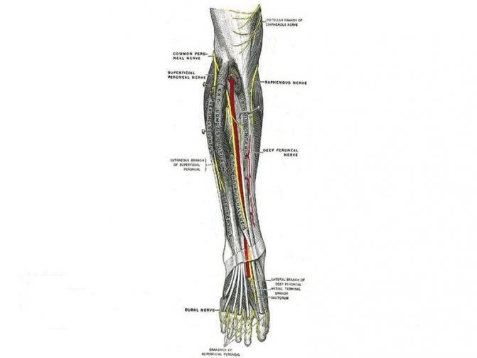 Лечение малоберцового нерва: невропатия, нейропатия, аксонопатия, невралгия, неврит и поражение