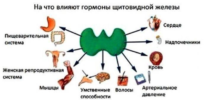 узлы щитовидной железы гормоны в норме