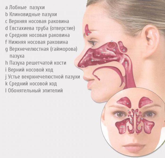 из чего состоит нос