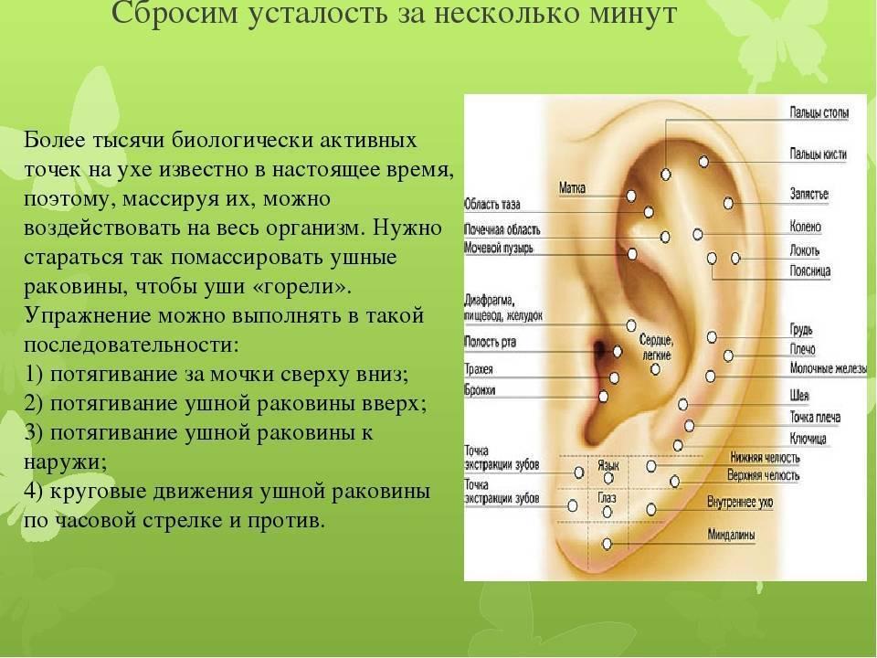 ушная раковина акупунктура