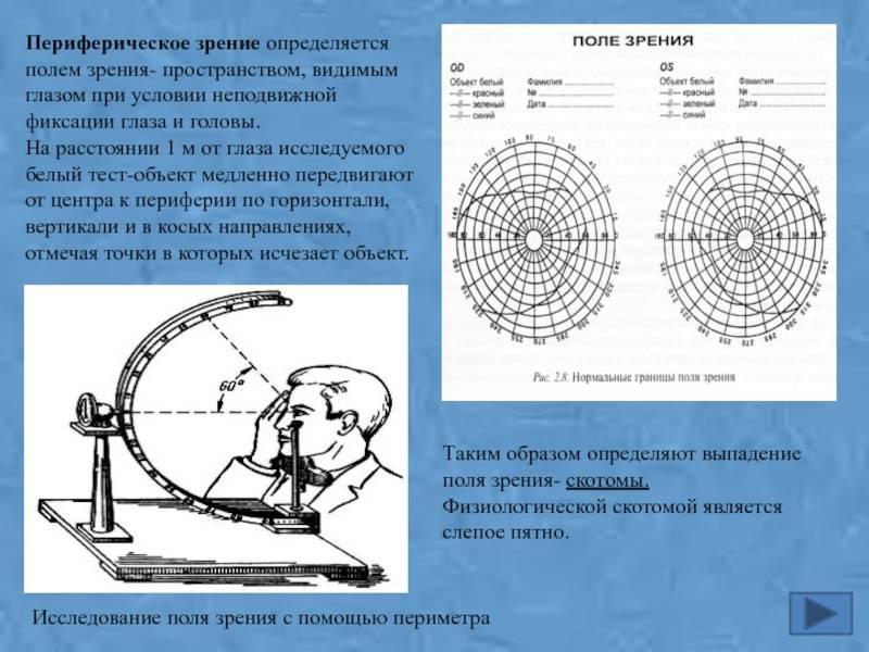 Периферическое зрение и методы его исследования