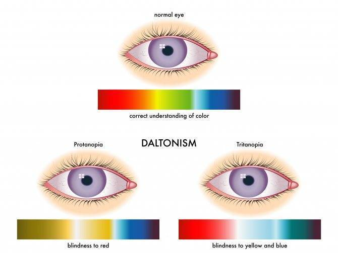 Урок 1. как устроено зрение человека