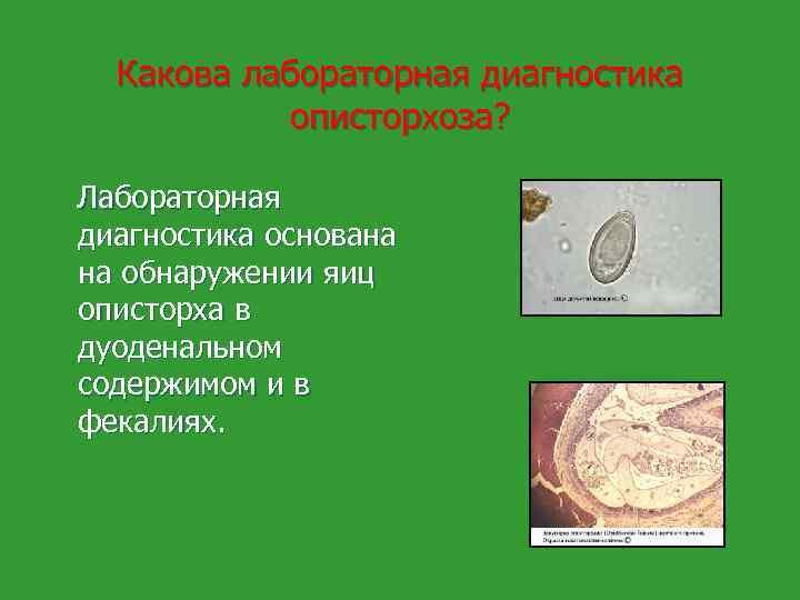 профилактика описторхоза и дифиллоботриоза памятка