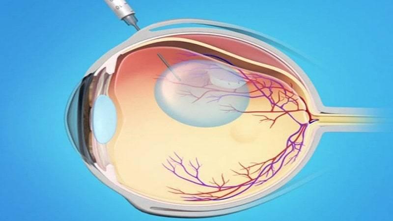 функции сетчатки глаза человека