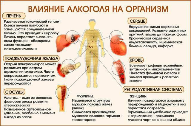 регенерация печени человека