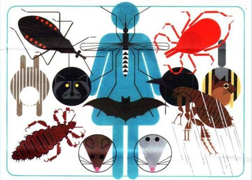 Читать книгу медицинская микробиология: конспект лекций для вузов александра седова : онлайн чтение - страница 6