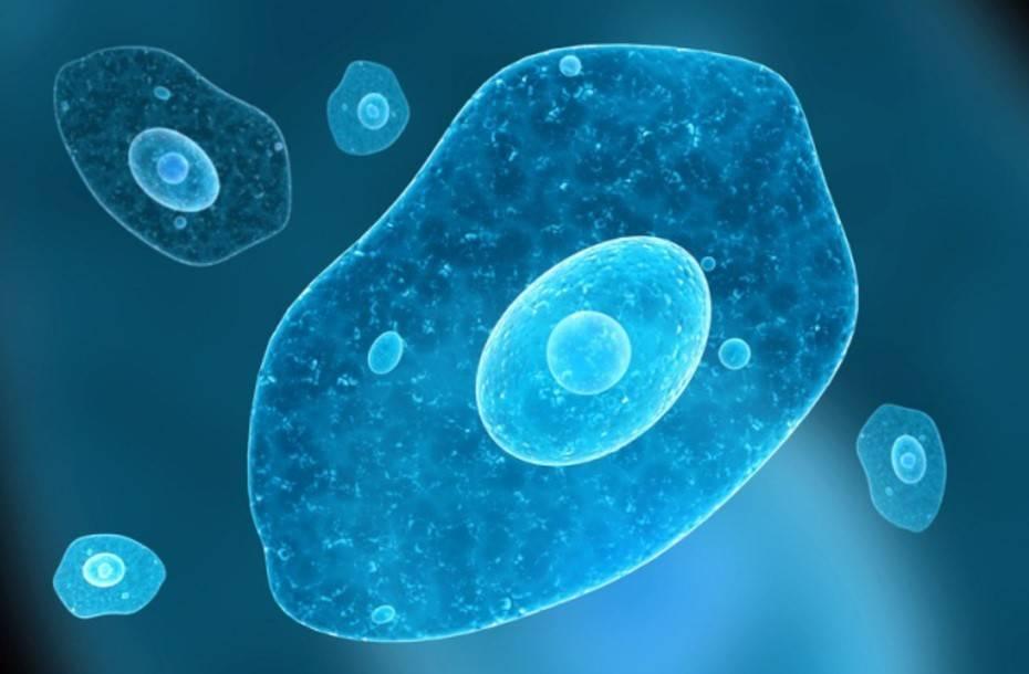 Дизентерийная амеба: как распознать