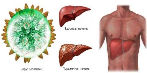 Носитель гепатита что это значит