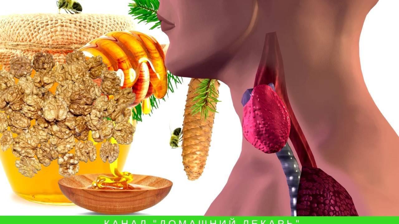 Особености лечения щитовидки грецкими орехами