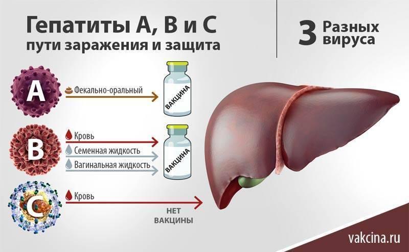 Хронические гепатиты.