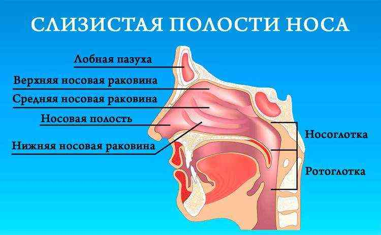 Причины и лечение сухости в носу — что делать и чем увлажнить слизистую носа?