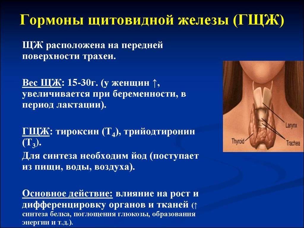 гормоны щитовидной железы таблетки