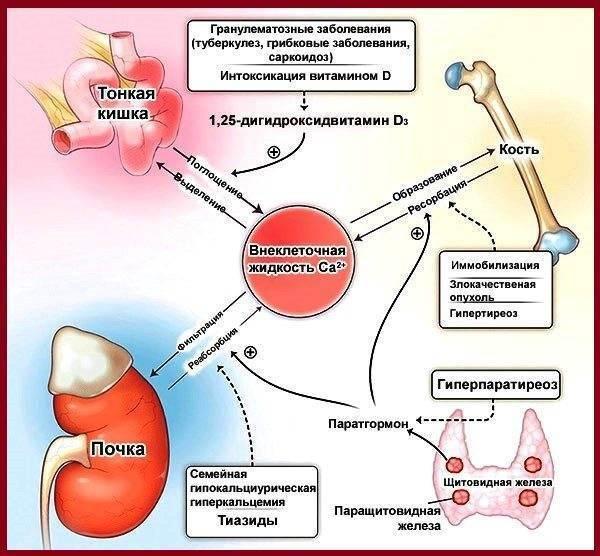 Что делать при возникновении узла в щитовидной железе