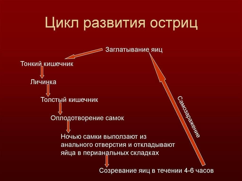 цикл развития острицы