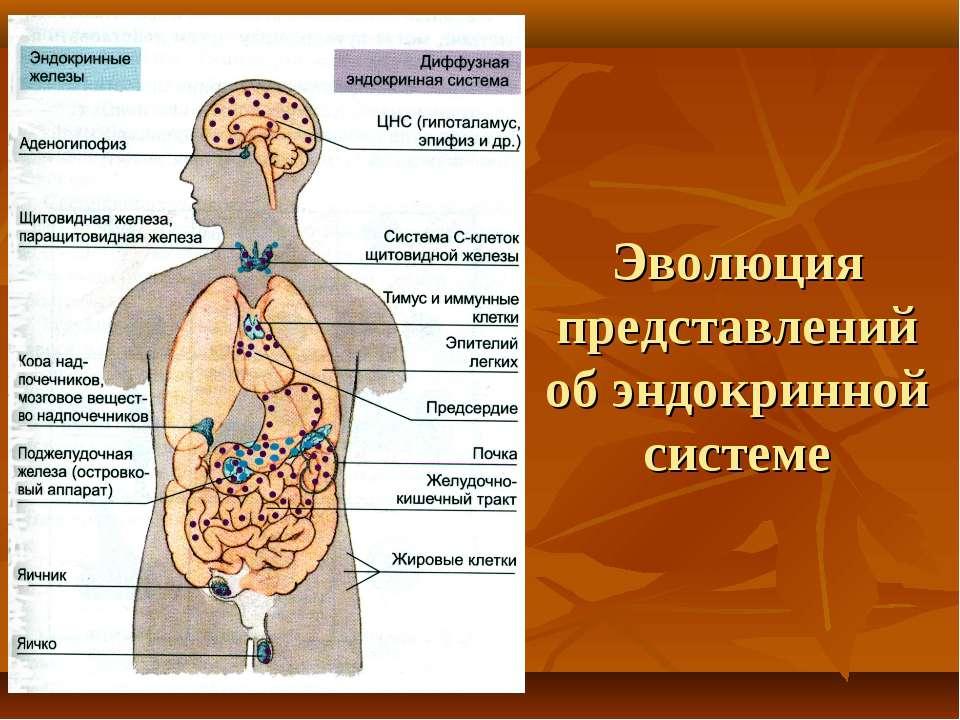 Лечение народными средствами эндокринной системы