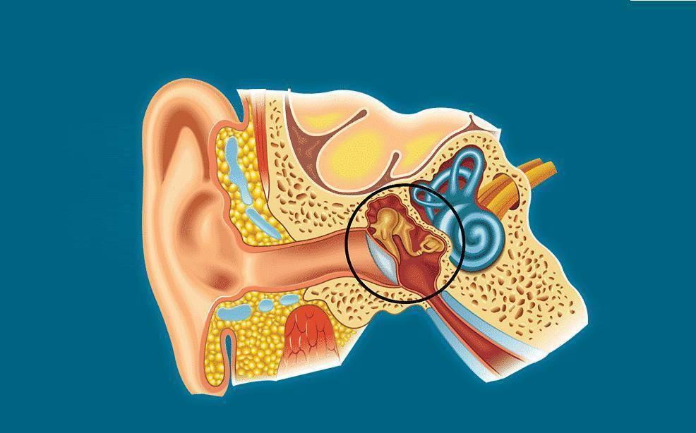 гной из уха у ребенка лечение