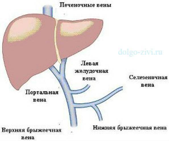 Тромбоз воротной вены печени: прогнозы на лечение. тромбоз печеночных вен