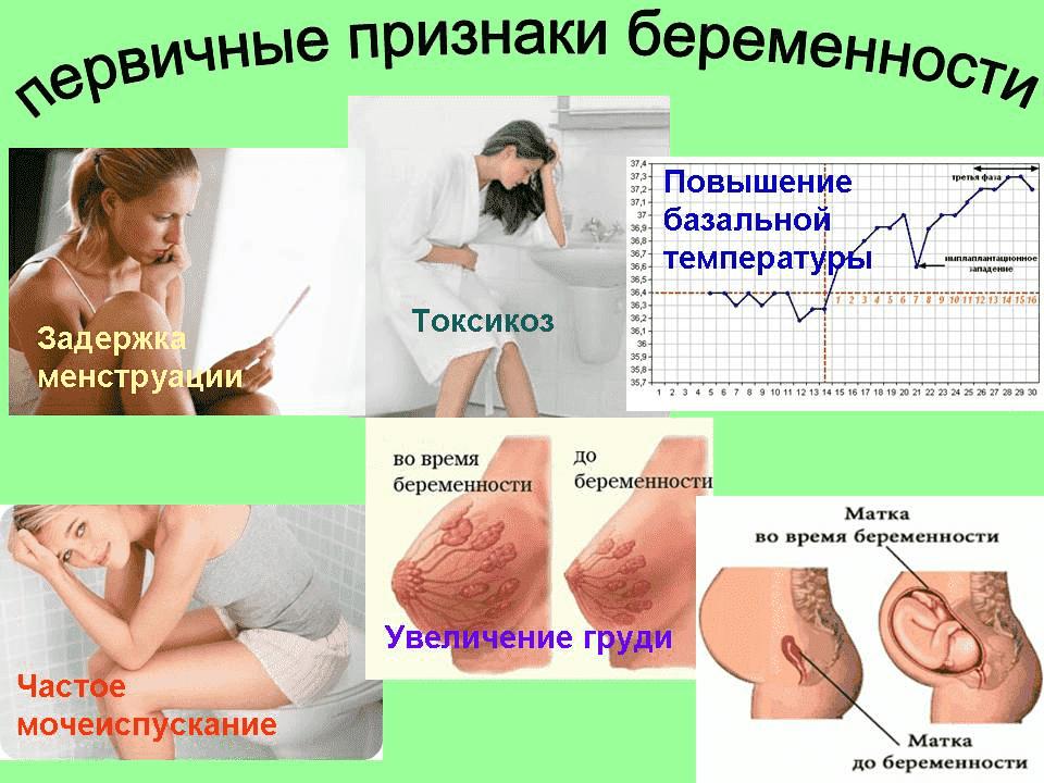 Сколько дней после зачатия начинает болеть грудь