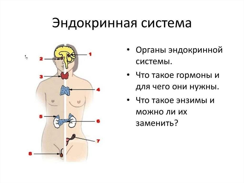 Нарушения и заболевания эндокринной системы: список болезней, причины, симптомы, профилактика и методы их лечения