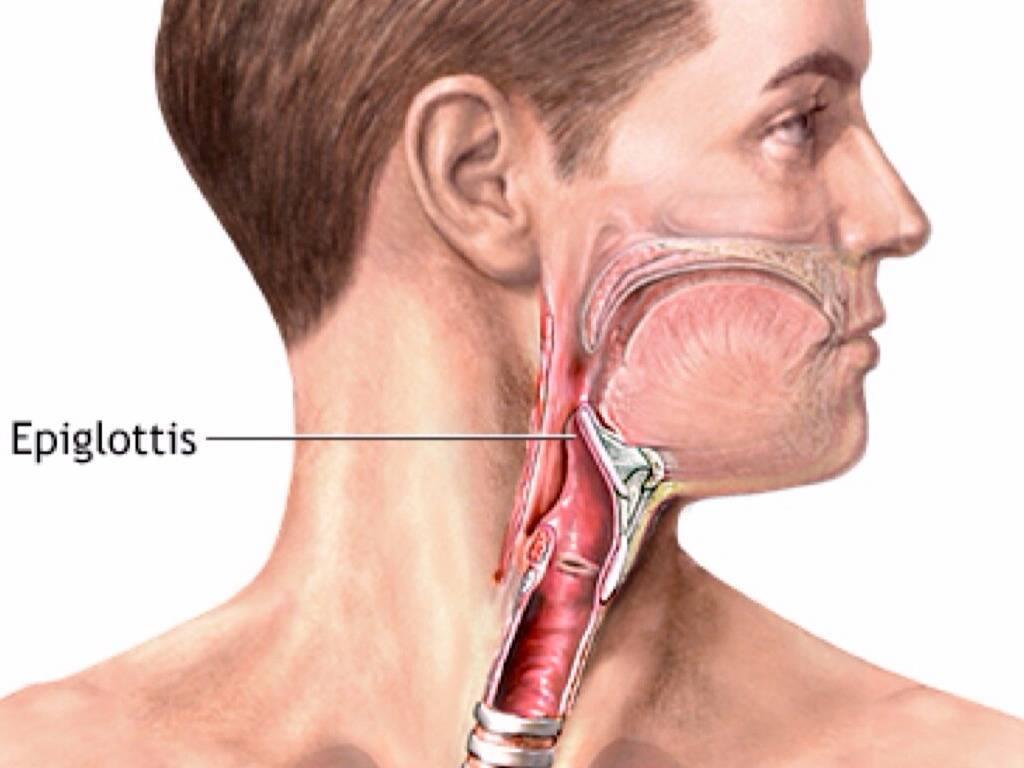 Строение гортани, глотки: причины заболевания