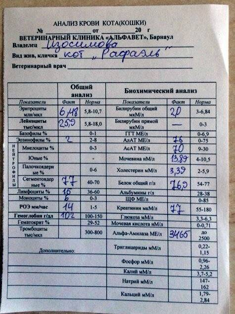 Как происходит диагностика при псориазе и какие сдаются анализы