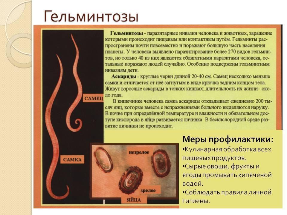 Признаки гельминтоза у взрослых